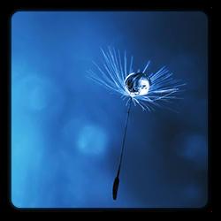Image vignette thématique blog MBSR Lyon Sciences